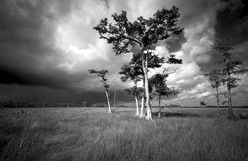 Big Cypress National Preserve Collection