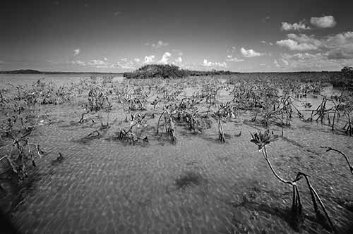 Biscayne National Park Collection