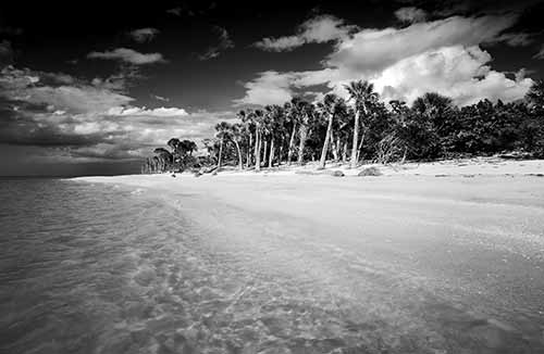 Cayo Costa Island State Park Collection