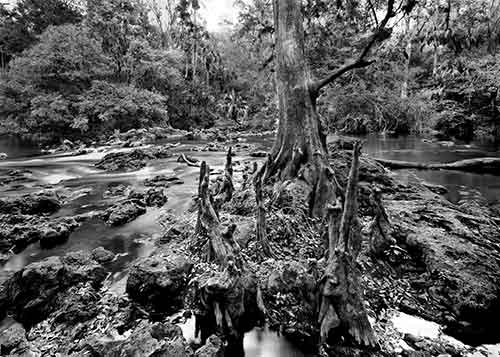 Hillsborough River State Park Collection