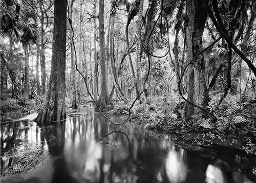 Jonathan Dickinson State Park Collection