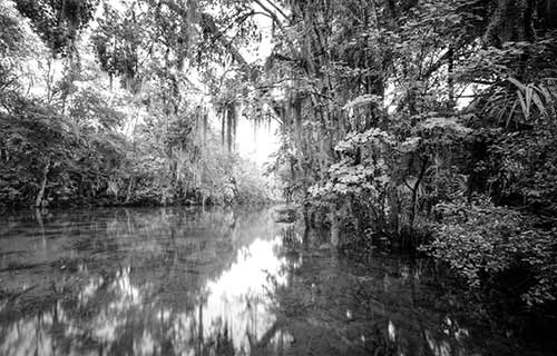 Silver Springs State Park Collection