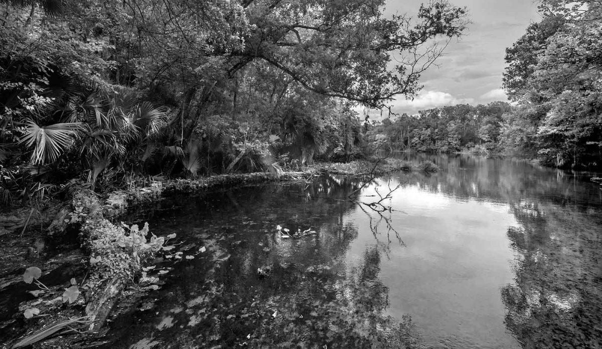 Wekiwa Springs 3