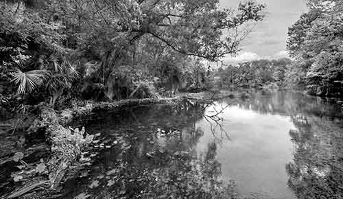 Wekiwa Springs State Park Collection