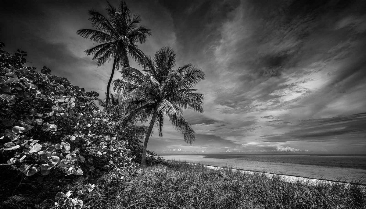 Bahia Honda Twin Palms