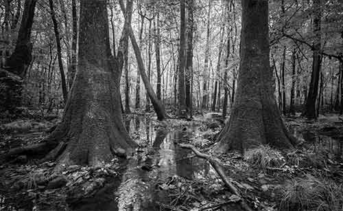 Congaree National Park Collection
