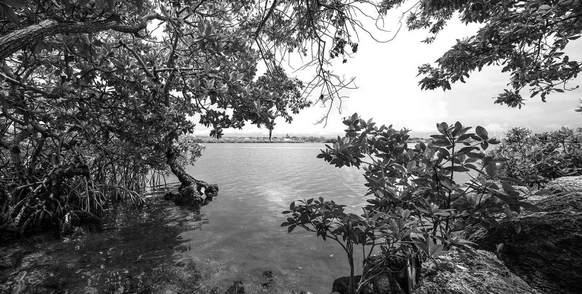 Pennekamp Bay