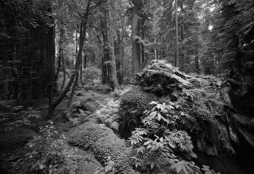 Redwood National Park Collection