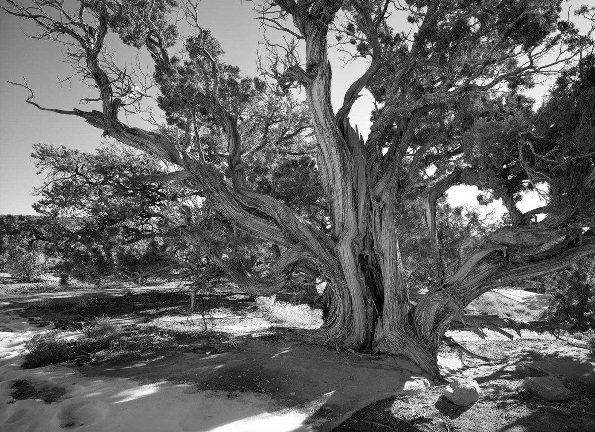 Canyon de Chelly 3