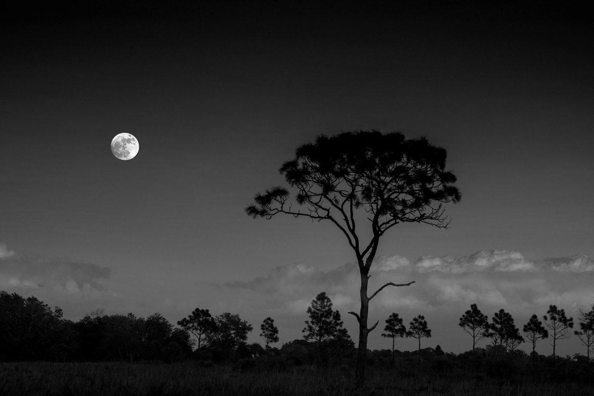 Moon Over Myakka