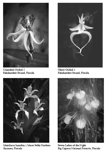 Floral collection clyde butcher black white fine art photography flower back mightylinksfo