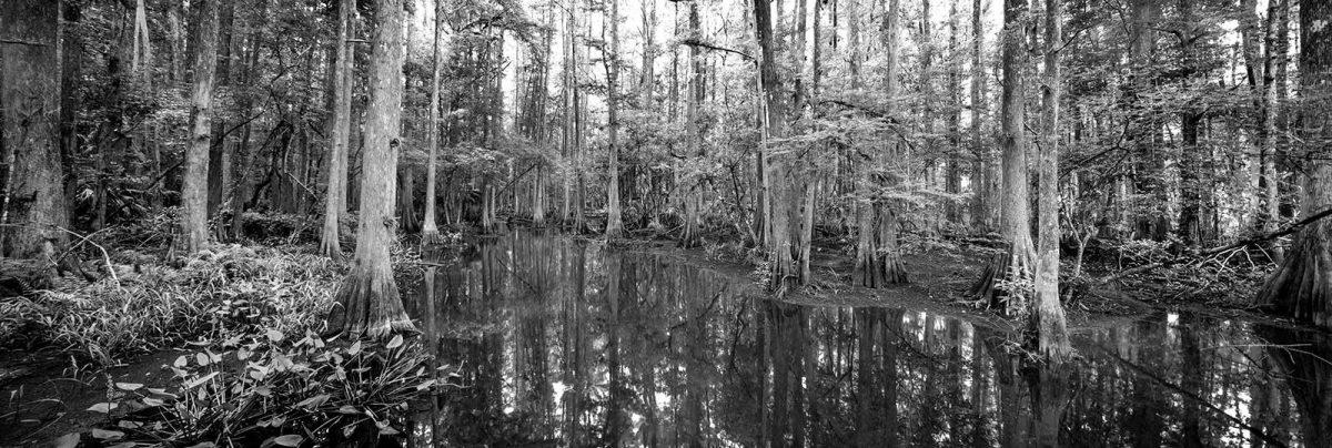 Highland Hammock Creek