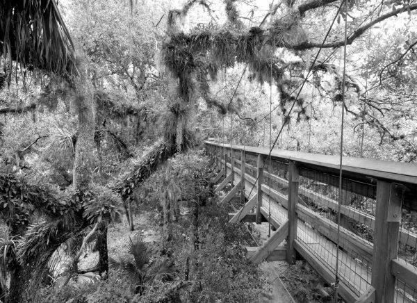Myakka Canopy Bridge
