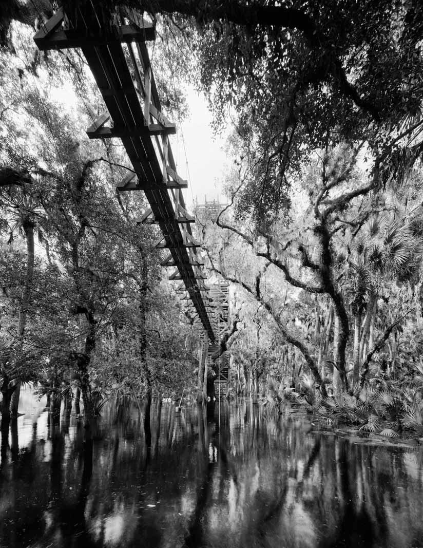 Myakka Canopy Walk