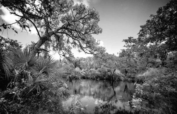 Myakka River Bluff