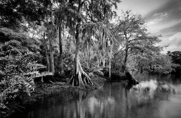 Loxahatchee River 13