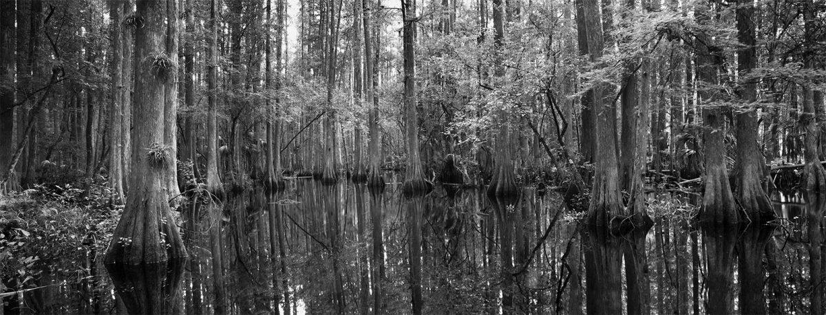 Cypress-Swamp-Trail1600px