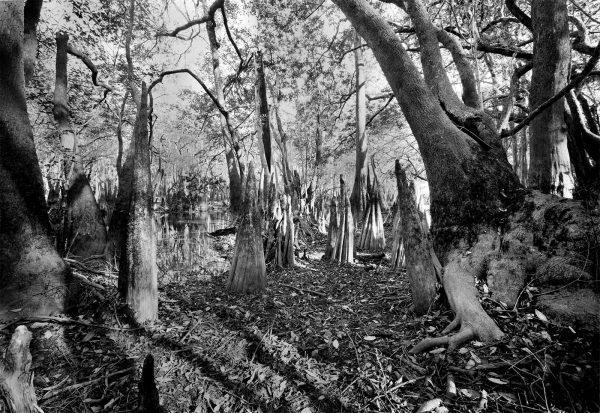 kennedy-creek-5