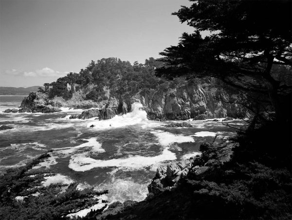 point-lobos-17
