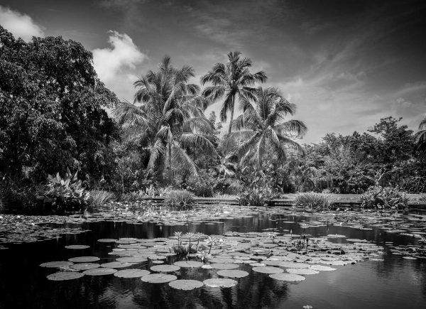 Naples-Botanical-Gardens-Pond