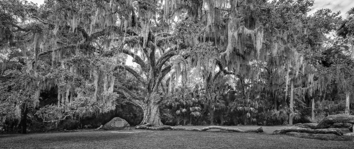 Fairchild-Oak